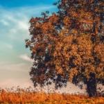 Quali alberi potare a novembre