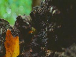 suolo del frutteto