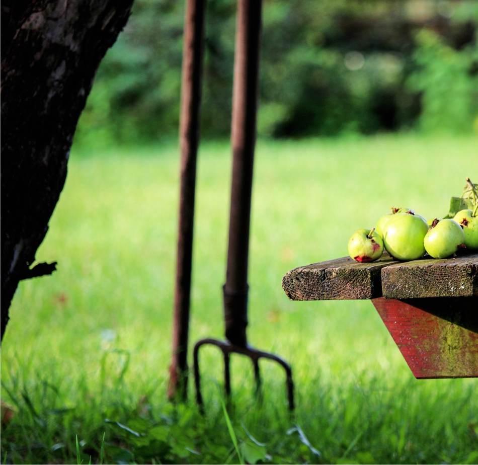 Piante Da Frutto Nane piantare il melo: come e quando si mette a dimora