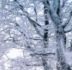 la neve a gennaio