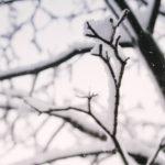 Le potature di febbraio