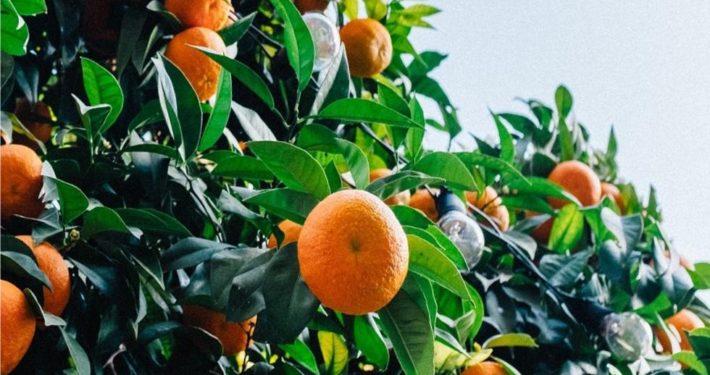marzo frutteto