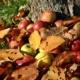 frutteto autunnale