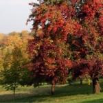Cosa potare a ottobre nel frutteto