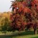 gli alberi ad ottobre