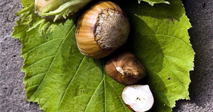 semi di nocciola