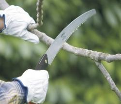 taglio di un ramo con segaccio