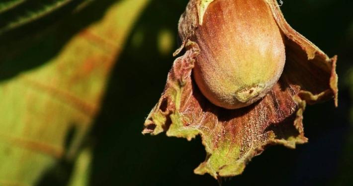 Calendario Trattamenti Frutteto.Frutteto Biologico Consigli Di Coltivazione Naturale