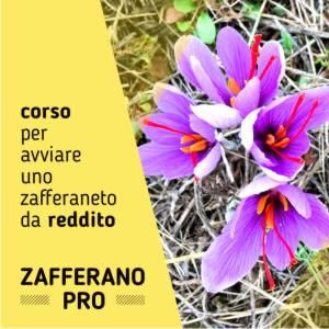 corso zafferano